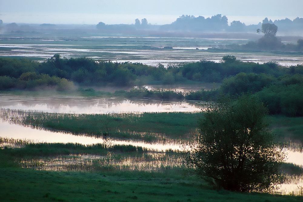 Zdjęcie przedstawia mokradła Biebrzańskiego Parku Narodowego o wschodzie słońca